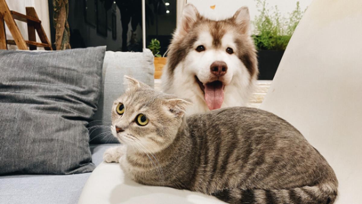 ペットの手作り食に不安な犬猫