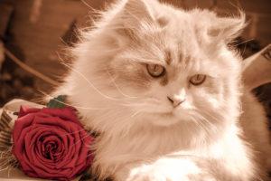 ローズローズアニマルクリニックの猫